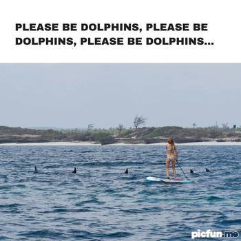 please-be-dolphins.jpg